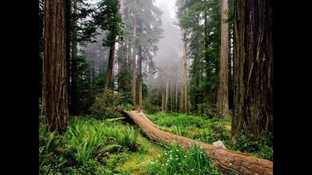 spaceredwoods